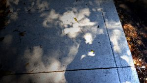 Color image, shadow of Michael Vasquez shooting the trees.